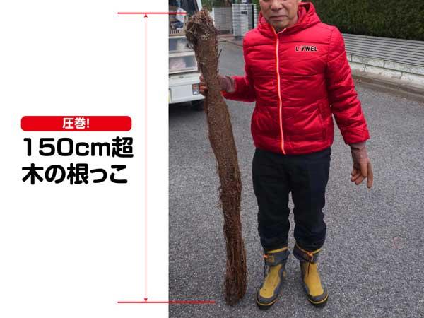 排水管洗浄したら大きな木の根っこが出てきました