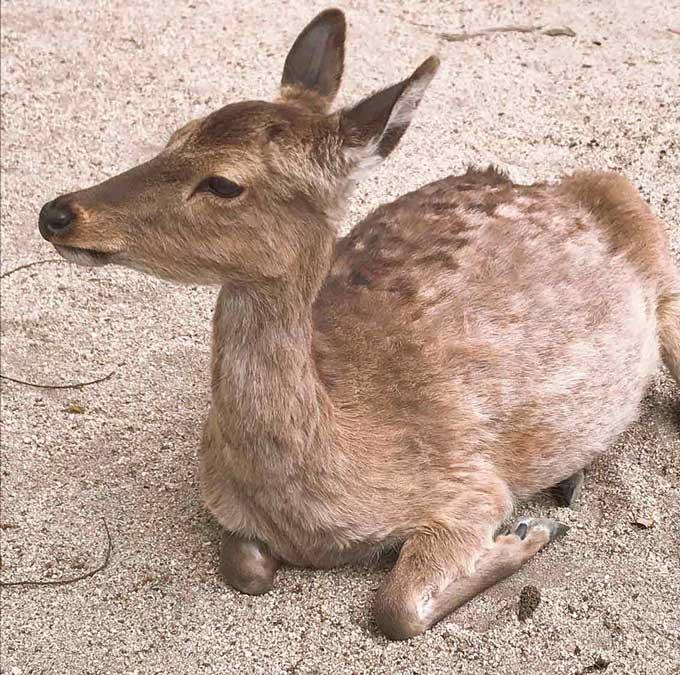 鹿はツンデレ